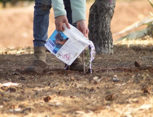 Dia de l'arbre de l'aulari de Quart de les Valls